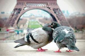Duer med Eiffeltårnet og Versailles-slottet i baggrunden